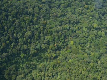 Pictorial view of the congo rain forest