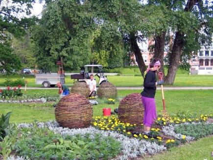 Parkenheten er i full gang med  fullfre sommerbeplantning i viftebed 10. juni 2013 Ivrige ansatte i parkenheten trives med  plante blomster