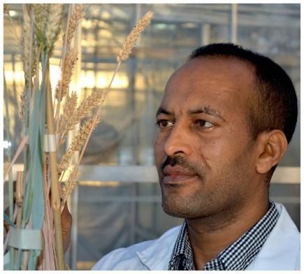 Doktorgraden til Addis A. Hindeya har bidratt til kt bruk av bygg som matkorn i Nord- Etiopia.