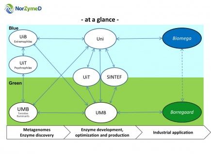 NorZymeD-konsortiet utgjer tilsaman den viktigaste kompetansen innan metagenomikk, enzymutvikling, biokatalyse og bioraffinering i Norge, og har som ml  utvikla konkurransedyktig enzymteknologi for prosessering av norsk biomasse og dermed auka verdiskapinga i norsk biobasert industri
