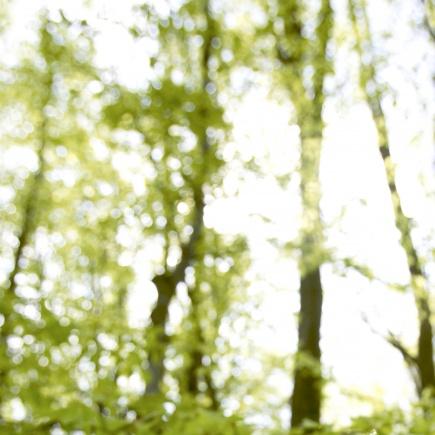 Karbohydrater fra trr kan hentes ut og brukes som tilsetting i matvarer i fremtiden.