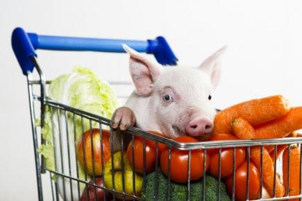 Er svinekjtt blitt farlig?