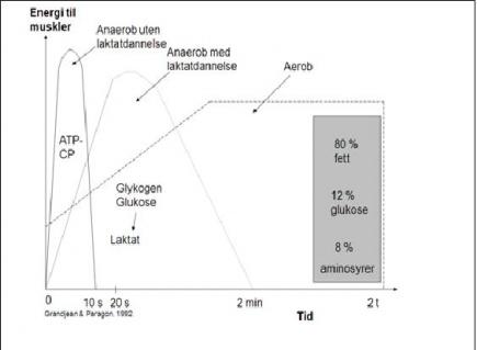 Figur 1. Energikilden endres i lpet av lpeturen. Fra ATP i de frste ti sekundene til ren fettforbrenning hvis lpet varer flere timer.