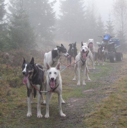Hunder er spesialiserte langdistanselpere med et hyt oksygenopptak