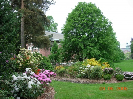 Rhododendronfeltet med Trnbygningen i bakgrunnen