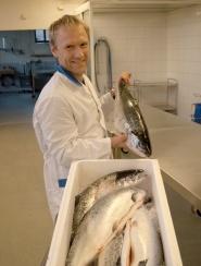 Stipendiat Jrgen Lerfall p jakt etter fiskefileter med spor etter pankreas-smitte