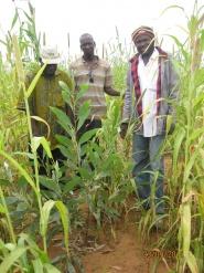 Planting trees, Mali.