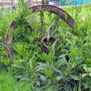 Gjenglemt hage ved tuntreet, sommer 2012