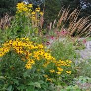 Blomsterflor, hst i UMB parken<br /> - Staudehagen