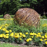 En hvilende kule, flettet av pil, sommeren 2013