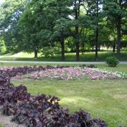 Sommerblomster i viftebed juni 2010