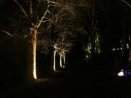 Magisk lyssetting ved UMB<br />Turstien ved Svandedammen.<br />