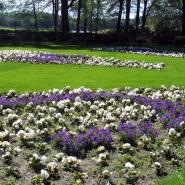Sommerbeplantning UMB-parken 2011